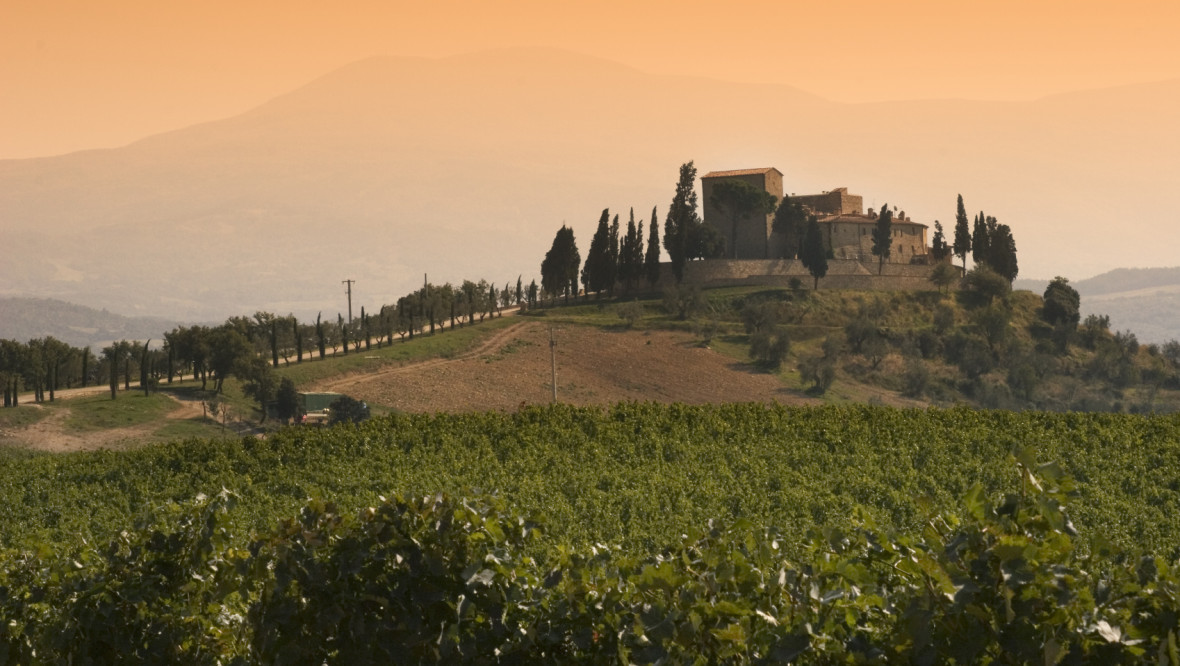 Tuscan vineyard in the fall